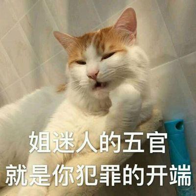 可爱的黄白猫咪表情包带字的qq动物头像