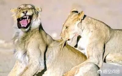 你有没有一些觉得特别搞笑的动物图片?