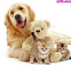 搞笑动物图片,可爱动物QQ表情大全