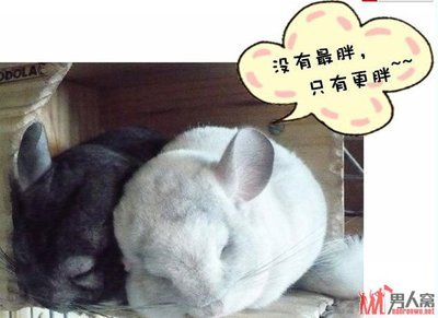 动物各种超恶搞的搞笑图片【组图】(4)_男人窝