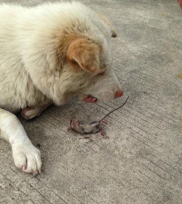 【劲爆】搞笑动物之过街老鼠人人喊打,倒霉的