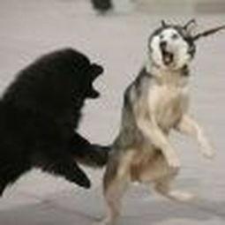 微信动物头像表情大全搞笑图片