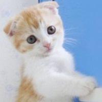 动物漫画萌图_微信头像图片大全