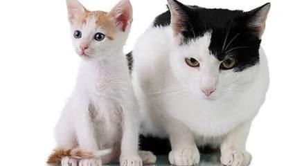 动物胖瘦对比搞笑图