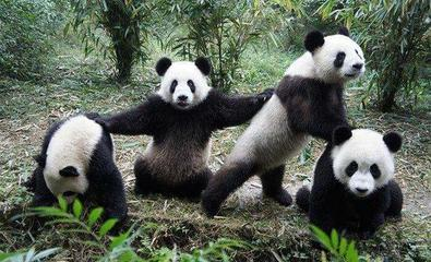 全球评选,44张图片, 搞笑幽默可爱动物大合集