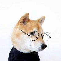 搞笑逗比柴犬头像图片_微信头像图片大全