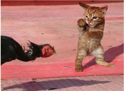 [搞笑动物图片笑死人]搞笑动物图片带字的图