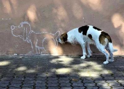 这些搞笑的动物照片,究竟是怎么拍出来的呢?