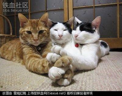 动物表情搞笑可爱图片大全|动物表情,搞笑可爱