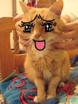 猫的搞笑图片-动物图片-热图网