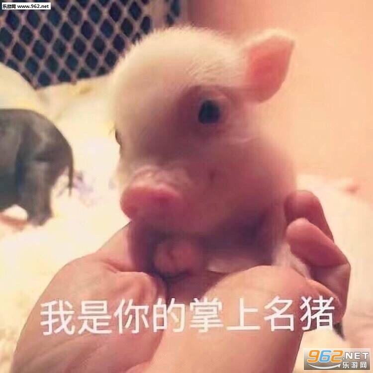 动物带字搞笑图片