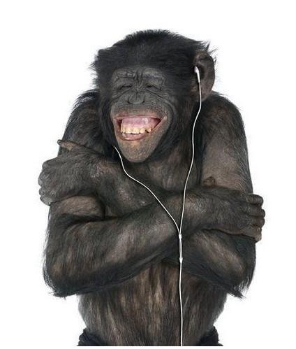 笑喷了!动物抓狂时的搞笑表情(组图)