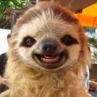 搞笑动物头像图片 qq搞笑头像图片大全