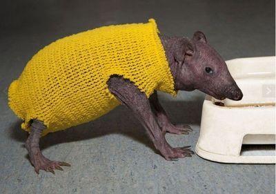 2011年度最萌动物搞笑图片图片_互动图片