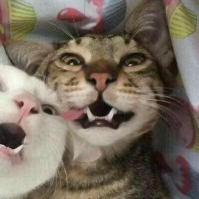 沙雕宠物情侣头像 高清很沙雕的情侣头像搞笑