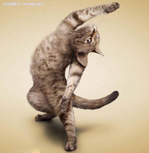 健身卡通图片搞笑图片|动物健身搞笑图片