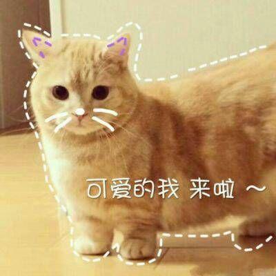 动物搞笑图片大全可爱_动物搞笑图片带字的图片