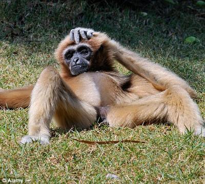 动物笑的图片搞笑图片_动物搞笑图片高清图片