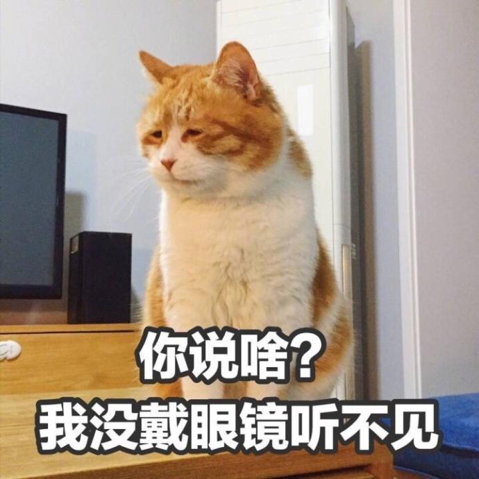 搞怪高清的小猫带字表情图片表情包大全(2)