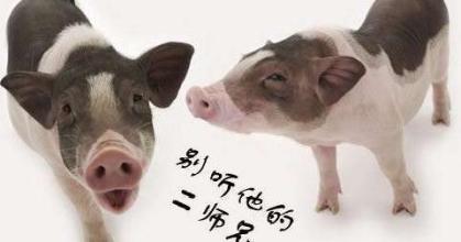 搞笑动物图片大全带字_微信头像图片大全