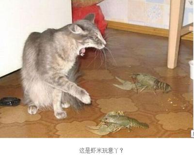动物搞笑图片大全可爱_动物搞笑图片