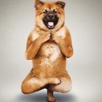 可爱的宠物头像 微信搞笑动物瑜伽头像