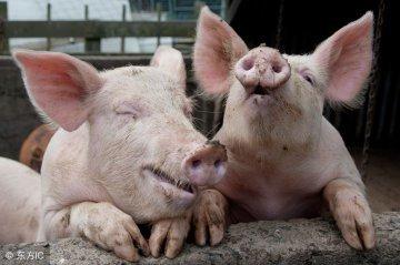 物搞笑图片-可爱动物图片,动物搞笑图片大全-搞