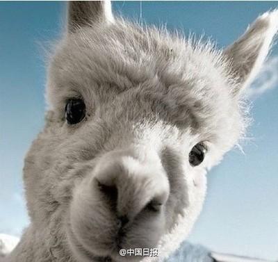 可爱动物自拍照搞笑图片 搞笑动物自拍照