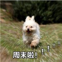 周末啦表情包动物奔跑系列