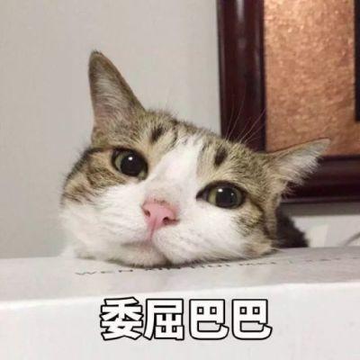 超可爱猫咪带字头像大全高清